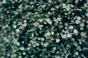 plant, leaves, heart
